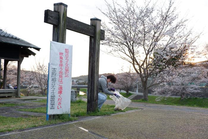 やすらぎの道美化作業と桜の画像
