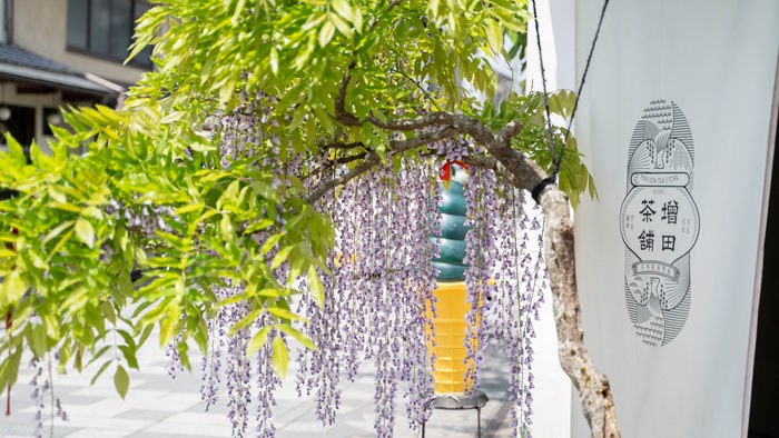 増田茶舗さんの藤の花の画像