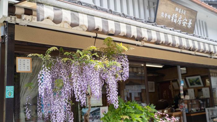 稲房さんの藤の花の画像