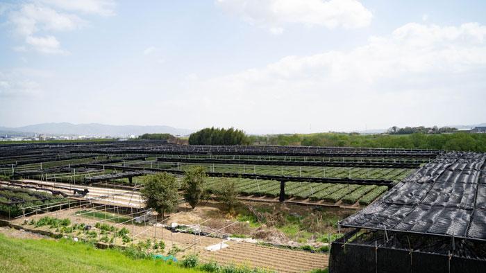 「日本茶800年の歴史散歩」の景観の画像