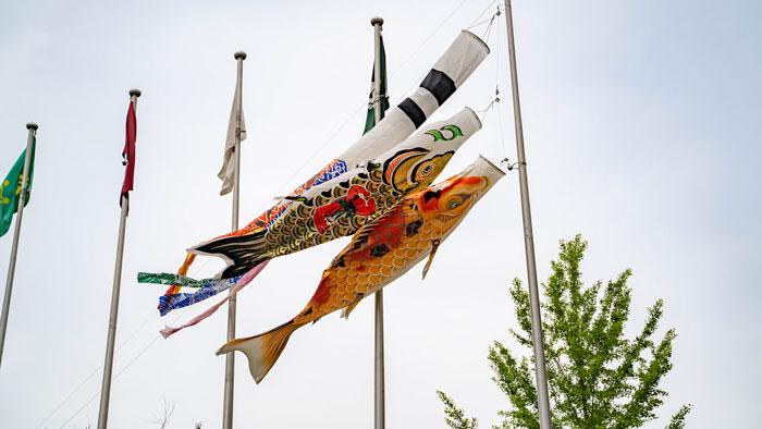 文パルの鯉のぼりの画像1