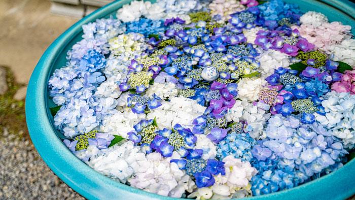 あじさいの花手水の画像1