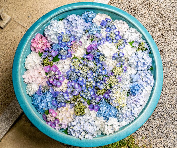 あじさいの花手水の上から画像