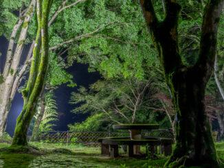 笠置寺の青もみじライトアップ画像