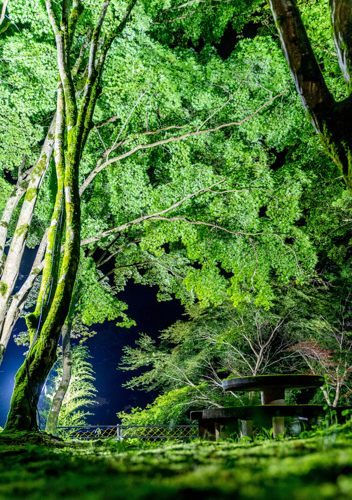 笠置寺の青紅葉ライトアップ画像2