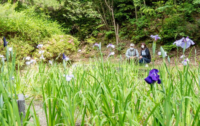 花しょうぶを眺める梅川会長の画像