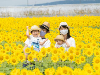 ひまわり畑を楽しむ家族の画像