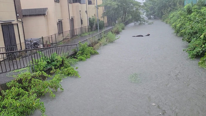 小倉井川付近の大雨画像2